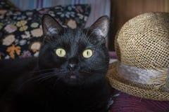 Gato negro y un sombrero de paja Imágenes de archivo libres de regalías