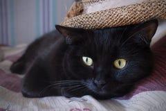 Gato negro y un sombrero de paja Imagen de archivo