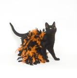 Gato negro y Víspera de Todos los Santos Foto de archivo libre de regalías