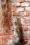 Gato nervoso foto de stock