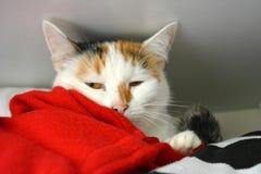Gato no armário Imagem de Stock Royalty Free