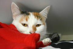 Gato no armário Foto de Stock