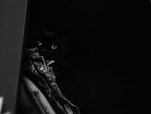 Gato no armário Fotos de Stock