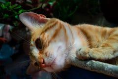 Gato no azul fotografia de stock