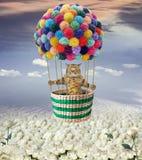 Gato no balão sobre rosas foto de stock