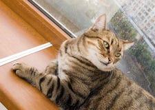 Gato no balcão foto de stock royalty free