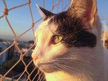 Gato no balcão no por do sol imagens de stock royalty free