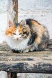 Gato no banch Fotografia de Stock Royalty Free