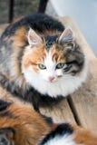 Gato no banch Fotografia de Stock
