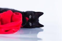 Gato no branco, gatinho, bola bonito, macia Imagem de Stock