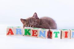 Gato no branco, gatinho, bola bonito, macia Fotos de Stock
