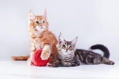 Gato no branco, gatinho, bola bonito, macia Imagens de Stock Royalty Free