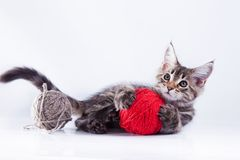 Gato no branco, gatinho, bola bonito, macia Fotografia de Stock