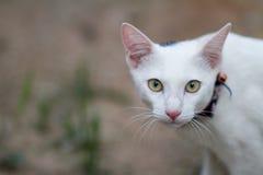 Gato no campo Imagens de Stock