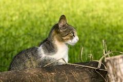 Gato no campo com grama borrada no fundo Fotos de Stock
