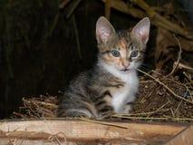 Gato no celeiro Imagens de Stock Royalty Free