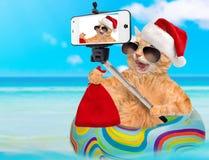 Gato no chapéu vermelho do Natal que toma um selfie junto com um smartphone Fotos de Stock