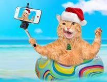 Gato no chapéu vermelho do Natal que toma um selfie junto com um smartphone Foto de Stock Royalty Free