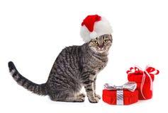 Gato no chapéu vermelho do xmas de Santa Claus com presentes Fotografia de Stock