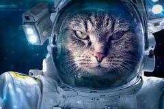Gato no espaço Fotos de Stock Royalty Free