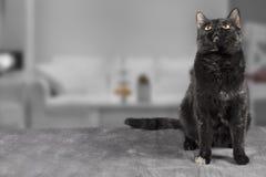 Gato no fundo cinzento Fotografia de Stock