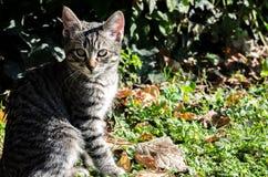 Gato no fundo verde com folhas secas Fotografia de Stock Royalty Free