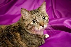 Gato no fundo violeta Imagem de Stock Royalty Free