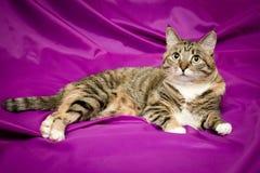Gato no fundo violeta Fotos de Stock Royalty Free