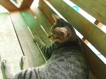 Gato no humor Fotos de Stock Royalty Free