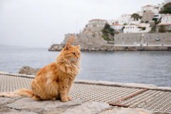 Gato no Hydra Foto de Stock Royalty Free