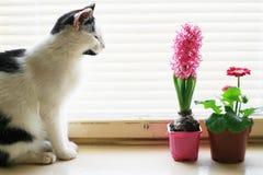 Gato no indicador foto de stock