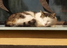 Gato no indicador Fotografia de Stock Royalty Free