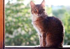 Gato no indicador Imagens de Stock