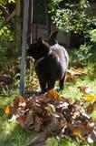 Gato no jardim Imagem de Stock