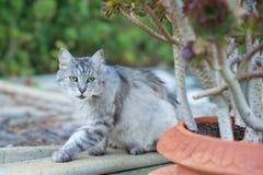 Gato no jardim fotos de stock