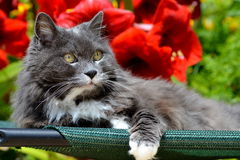 Gato no jardim Foto de Stock Royalty Free