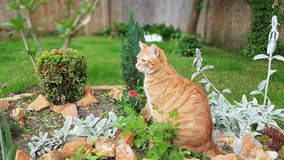 Gato no jardim Imagem de Stock Royalty Free