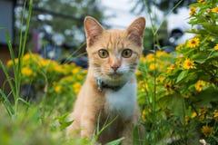 Gato no jardim Imagens de Stock
