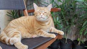 Gato no jardim home Fotografia de Stock Royalty Free