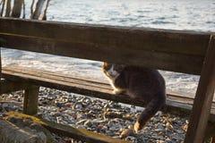 Gato no lago imagem de stock