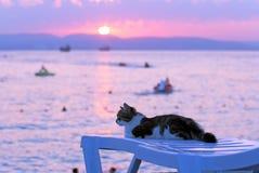 Gato no litoral foto de stock royalty free