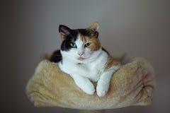 Gato no ninho Fotografia de Stock Royalty Free