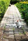 Gato no parque Imagem de Stock