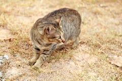 Gato no parque Fotografia de Stock Royalty Free