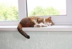 Gato no peitoril da janela Foto de Stock