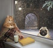 Gato no peitoril e um cão fora fotografia de stock