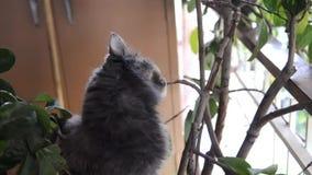 Gato no potenciômetro filme