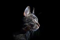Gato no preto Foto de Stock Royalty Free
