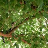 Gato no ramo de árvore Fotografia de Stock