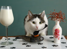 Gato no restaurante do animal de estimação com peixes crus e leite no vidro de vinho fotos de stock
